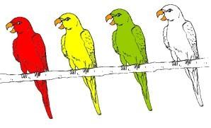 4 perroquets couleurs b