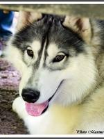 Laïcko (9 mois)