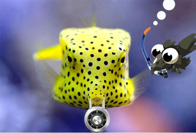 poisson-coffre