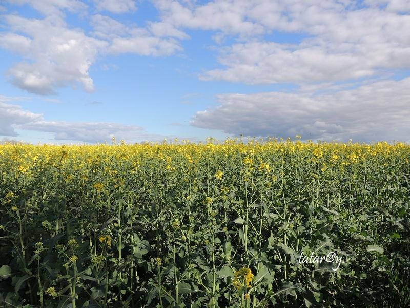Nature en verte et jaune....