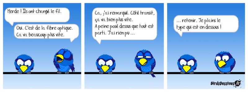 Les birds .......