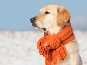 Une nouvelle loi interdit de laisser ses animaux dehors quand il fait trop froid