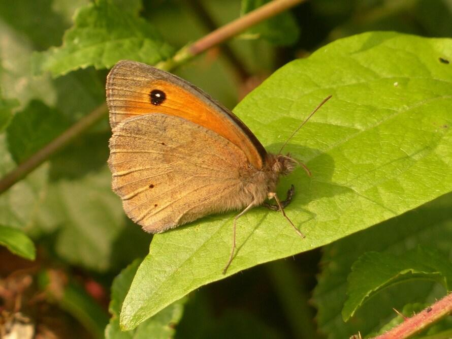 Papillons...Un peu de tout