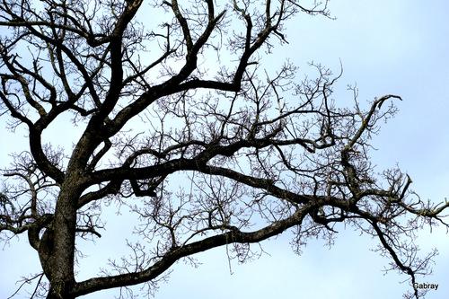 Début mars: les arbres nus!