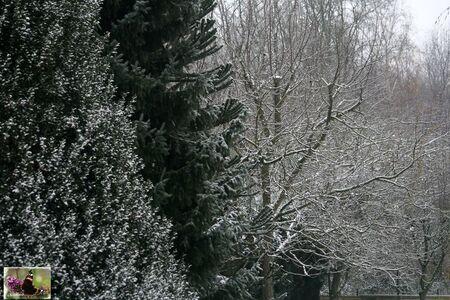 La_neige_003