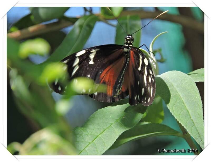 Au Paradis du Papillon à Sanguinet - 7/10