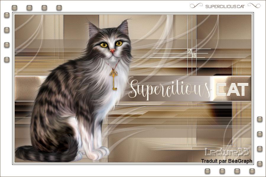 SUPERCILIOUS CAT