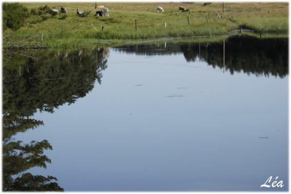 _MG_8364-plan-d-eau-Ganivet.jpg