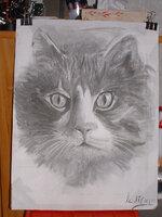 chat au fusain
