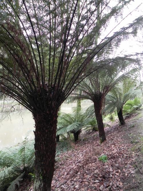 Janvier 2013 au  Parc