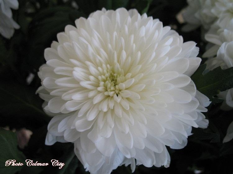 Des fleurs chez le coiffeur 30