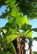 Histoires de floraisons et de plantes qui poussent...