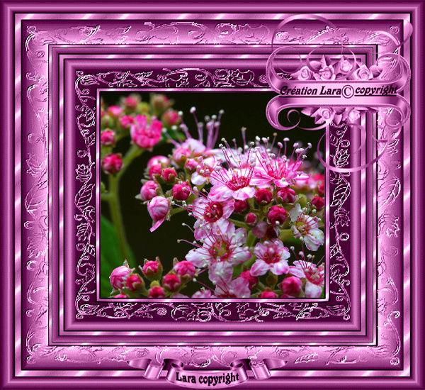 Créations fleurs