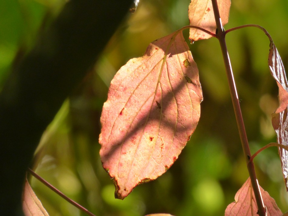 En couleur, la nature