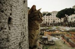 Le Sanctuaire des chats à Rome