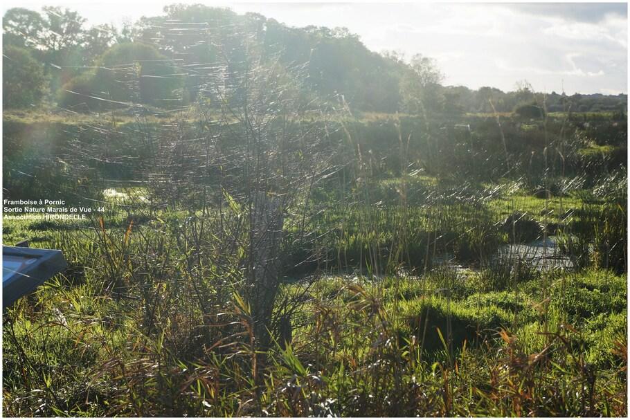 Le Marais de Vue
