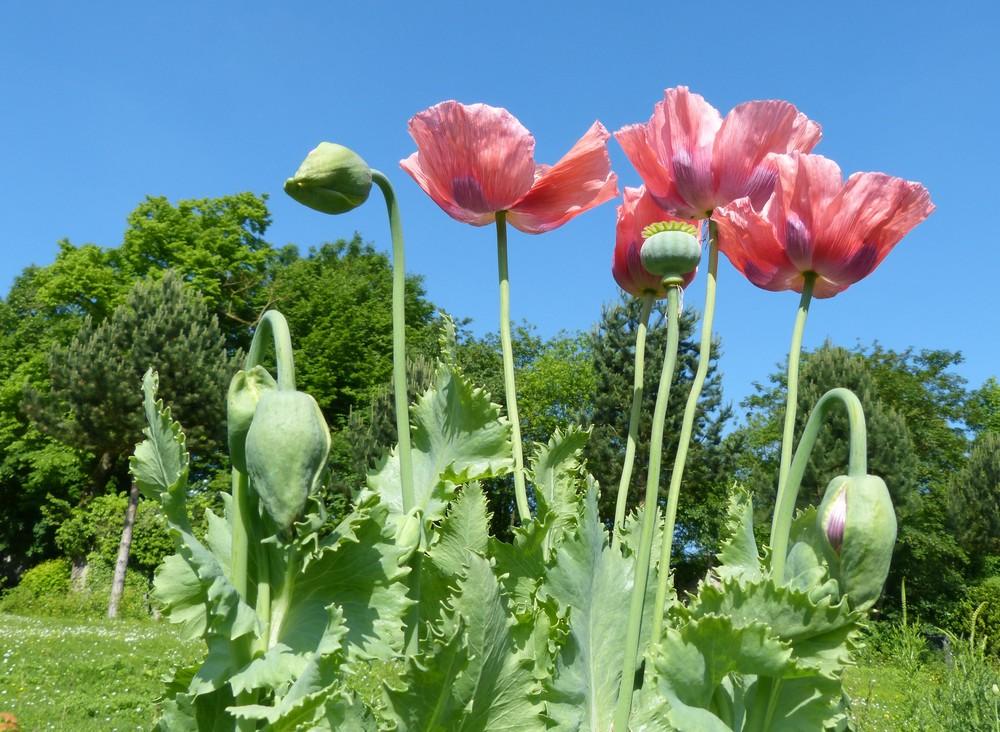 Extraordinaire ce jardin ...