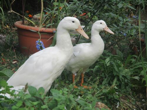 Blanche et Saturnin