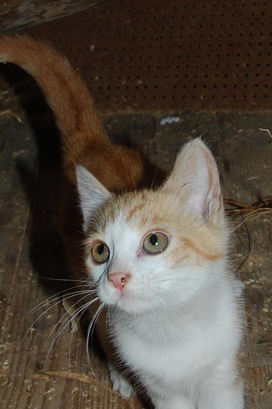 chaton18juilletf