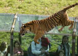 Parc zoologique et de loisirs de Thoiry