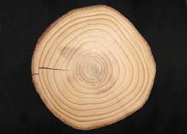 Connaître l'âge du bois