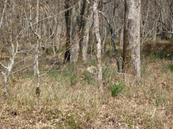 Promenade en forêt 3