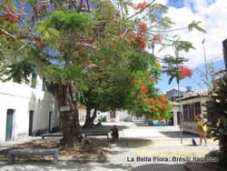 l'île d'Itaparica