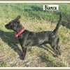 Bianca R 1