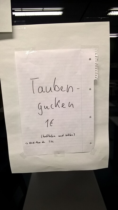 Taubengucken für 1 €