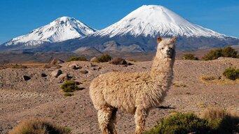 Chiles Norden: Lamas spucken, Vulkane schlafen