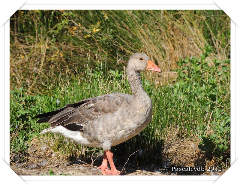 Visite aux oiseaux du Teich - 12/12