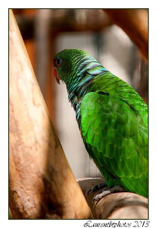 Zoo de Beauval, des oiseaux...
