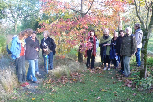 Les couleurs d'automne au jardin Zen
