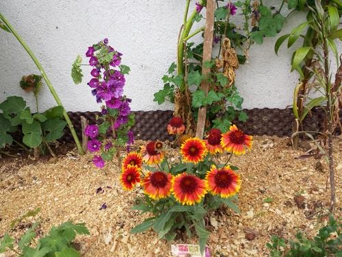 Roses et fleurs à admirer...