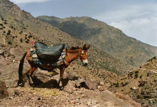 Une mule !!!
