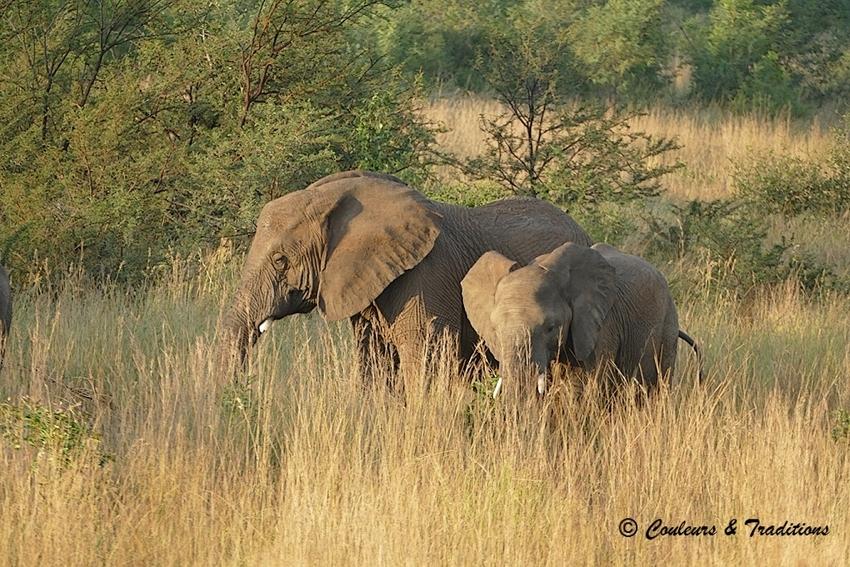 La horde d'éléphants