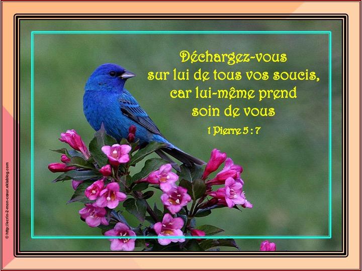 Déchargez-vous sur lui de tous vos soucis - 1 Pierre 5 : 7