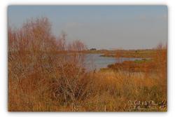 Environnement Pont de Gau