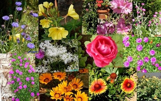 Un petit tour dans le jardin à l'annonce de l'été .....