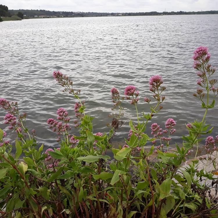 La lac du Sesquier..