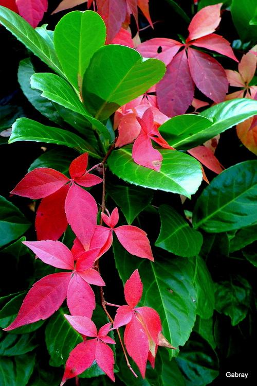Mon jardin : les feuilles en fin octobre ...