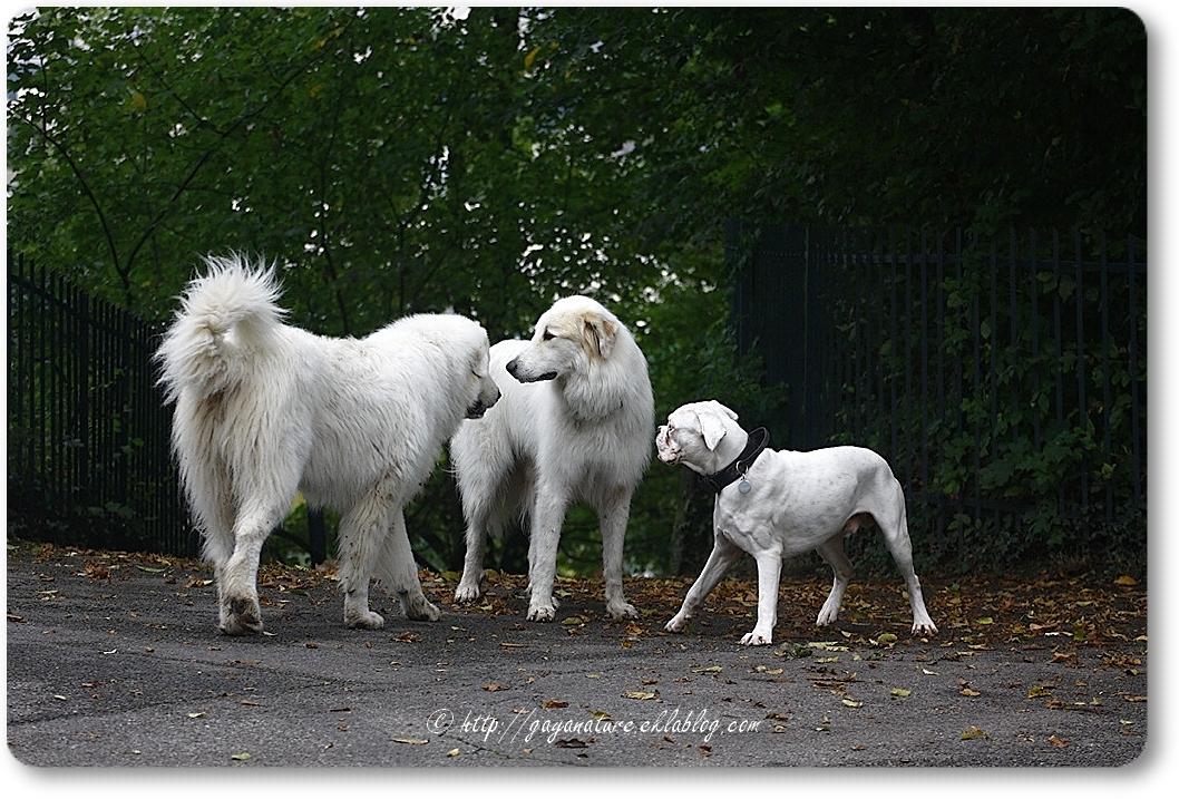 La meilleure école du chien (et des maîtres)