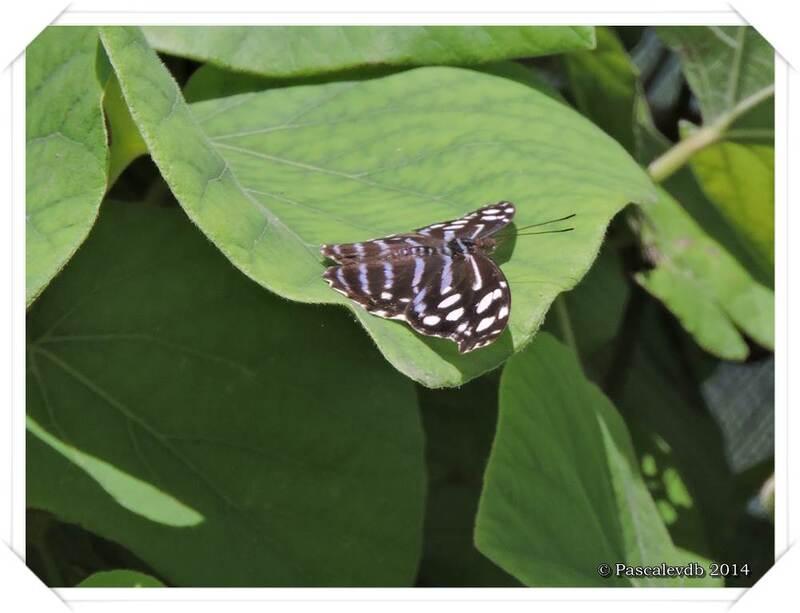 Au Paradis du Papillon à Sanguinet - 5/10
