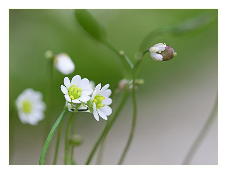 Mini bouquet de mini fleurs