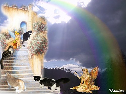 chats-porte.jpg