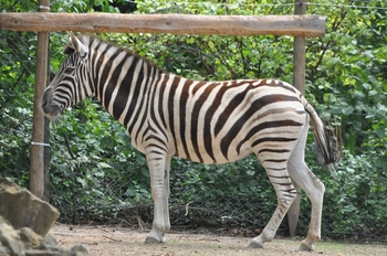 zoo allemagne 370
