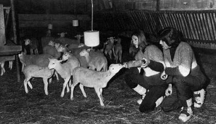 Janvier 1976 : L'âne, le Ringo et les petits moutons...