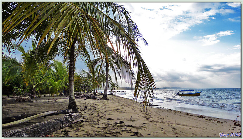 Plages de Manzanillo (Côte Atlantique) à la pointe extrême est du Costa Rica