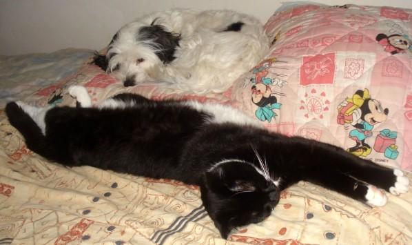 Fifi et Domino sur le lit