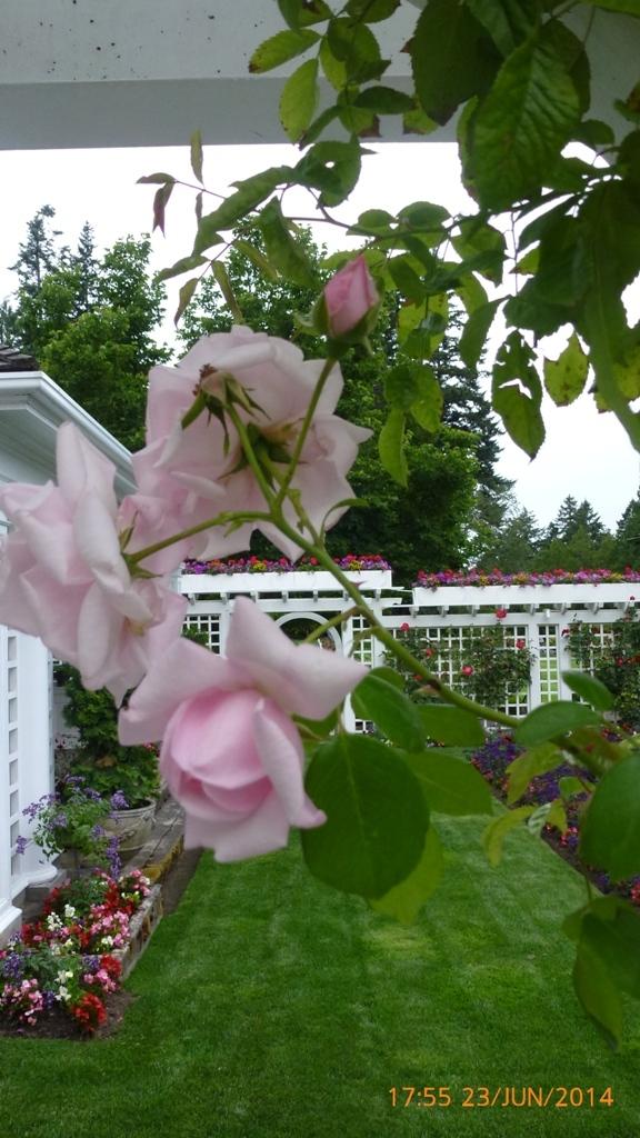 LES JARDINS BURCHART (Ile de Vancouver)